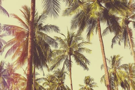 Fototapete - Palmen in der Karibik